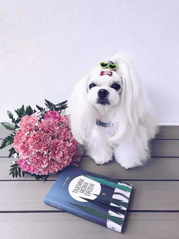 Pies na Medal Galeria 7