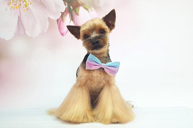 Stylizacje psów pies na medal