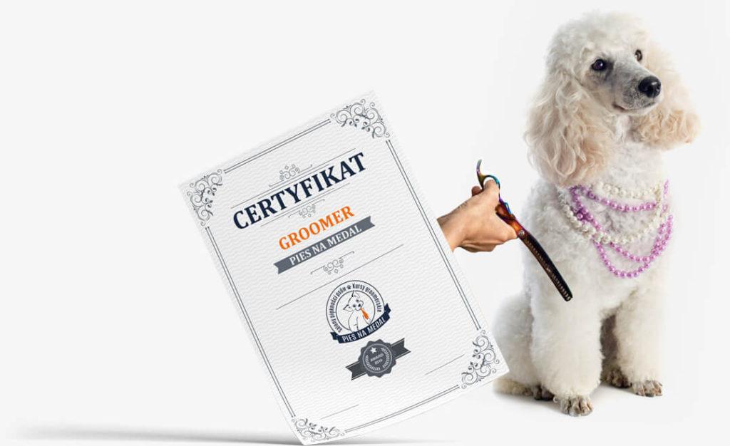 certyfikat groomer szkolenia pies na medal kraków