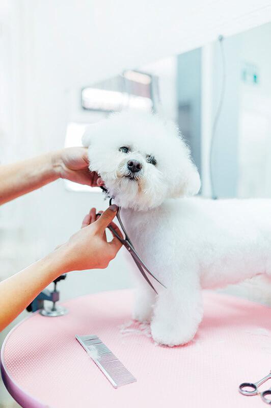 pies na medal cennik groomer
